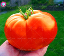 200pcs Gaint Organic Tomato Seeds Big Healthy Spring Bonsai Heirloom Vegetable Seeds Home Garden Supplies Planting