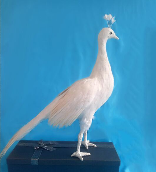 Vraie vie jouet oiseau grand 50x40 cm plumes blanches femme paon modèle artisanat maison jardin décoration partie accessoires jouet h0557