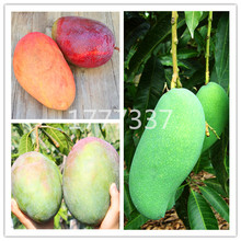 1Pcs/Bag Sweet Giant Mango Fruit Tree Plant Bonsai Rare Tropical Fresh Juicy For Garden Planting