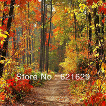 Autumn In Woods 8'x8′ CP Computer-painted Scenic Photography Background Photo Studio Backdrop ZJZ-671