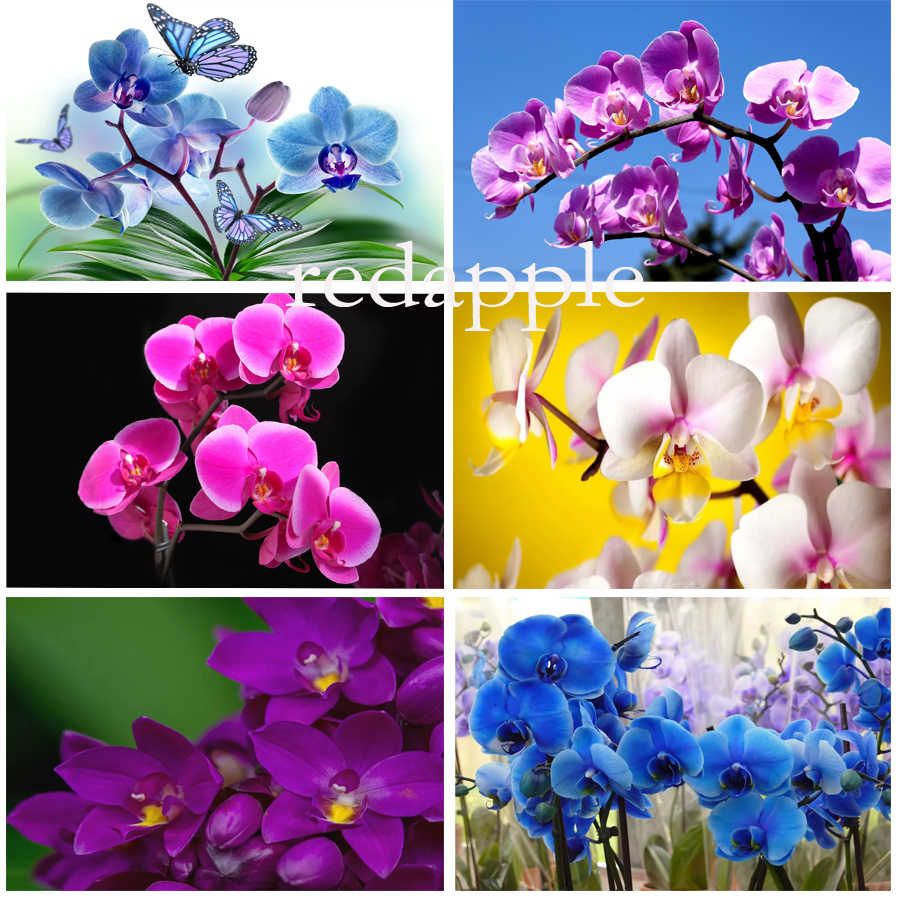 FULL diamond drill paintings orchid picture by rhinestones diamond embroidery flower icons painting mosaic new arrivals sale
