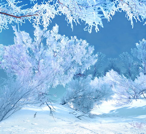 Kate Christmas Backdrop Photography Frozen Snow Tree Background Winter Scenic Photography Backdrops For Wedding kate christmas village background cartoon photography backdrop moon backgrounds blue winter background for children shoot