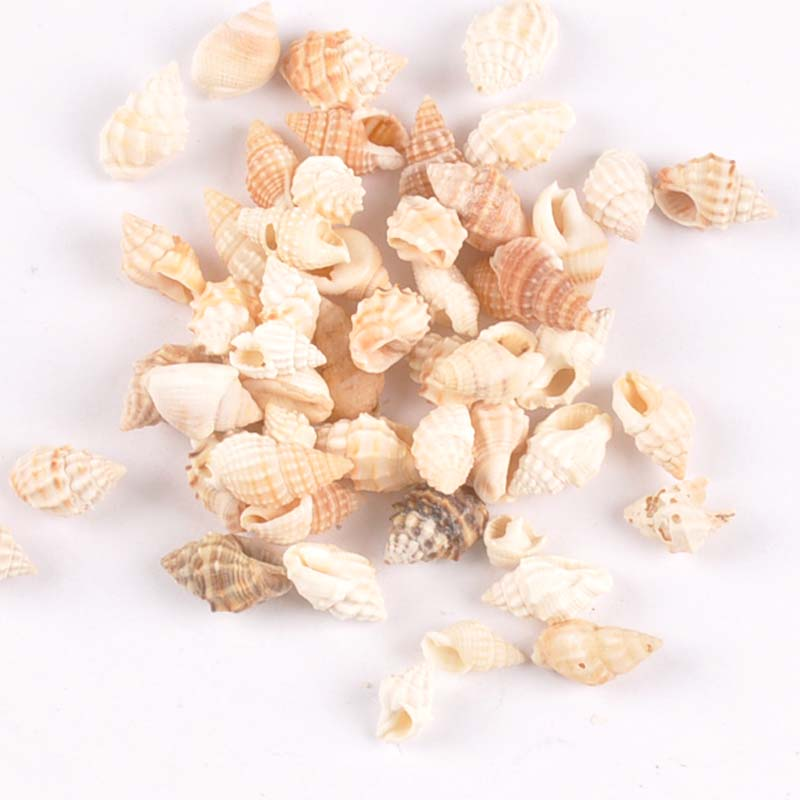 100pcs 8-13mm Brown Spiral Natural Shells DIY Glass Bottle Home Decor For Seashells Scrapbook Craft Accessories 11-15mm Tr0246