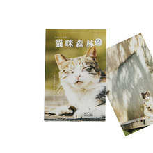 4packs/lot Cat Greeting Card Postcard Birthday Gift  Warm Sky Forest Letter Envelope