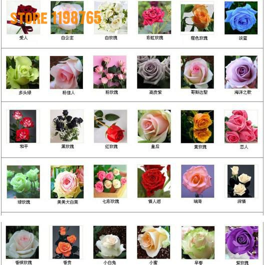 200pcs/bag Beautiful Flower Rainbow Rose Seeds Mix Flower Seeds,bonsai Seeds For Sale Home Garden