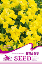 1 original pack 60pcs bright yellow common snapdragon seeds flower seeds for home garden bonsai