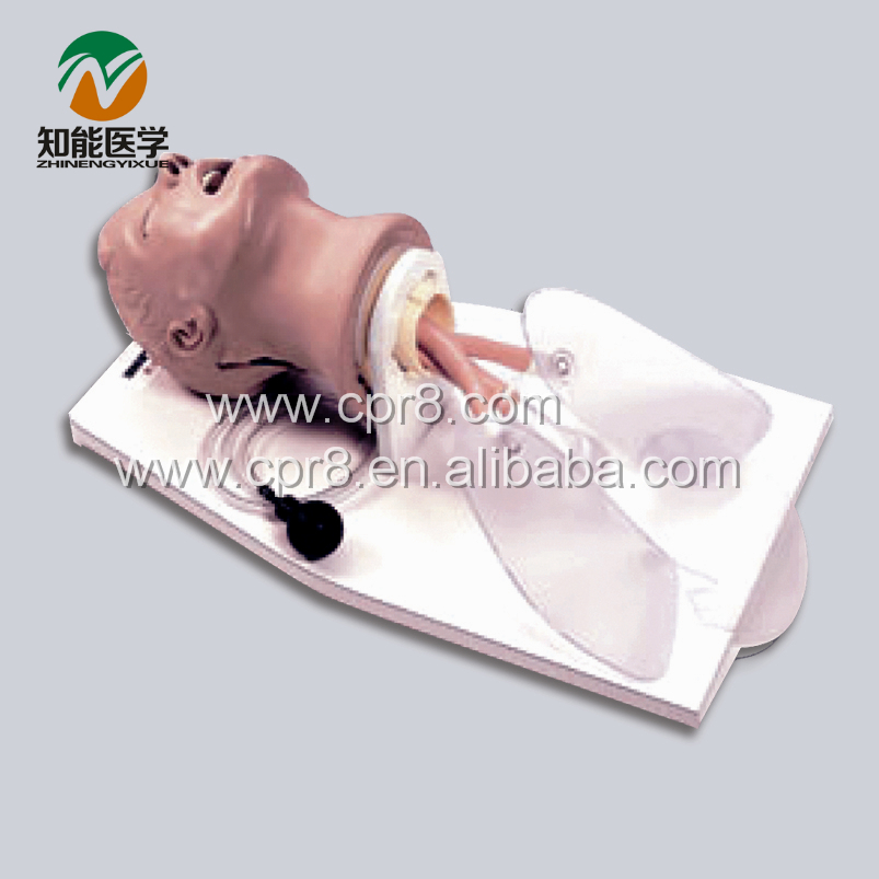 BIX-J50 Airway Training Model,Trachea Intubation Training Model WBW014 iso economic newborn baby intubation training model intubation trainer