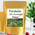 17.6oz (500g) Forskolin Extract Coleus Forskohlii Root 20% Standardized Powder, Belly Buster Fat Burner