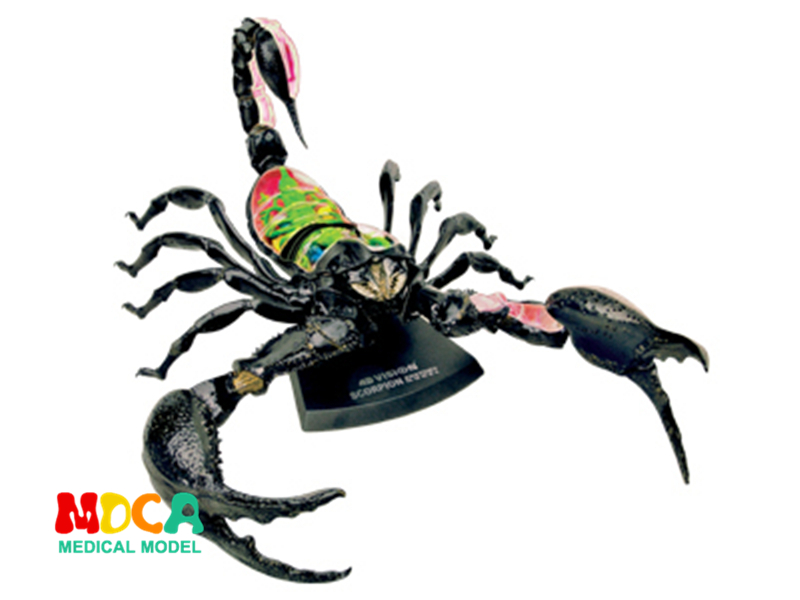 Scorpion 4d master puzzle Assembling toy Animal Biology organ anatomical model medical teaching model shunzaor dog ear lesion anatomical model animal model animal veterinary science medical teaching aids medical research model