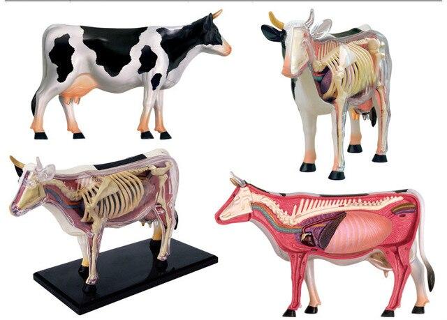 Anime 3D 4D Vison Cow Anatomy Medical Anatomic Animal Model with ...