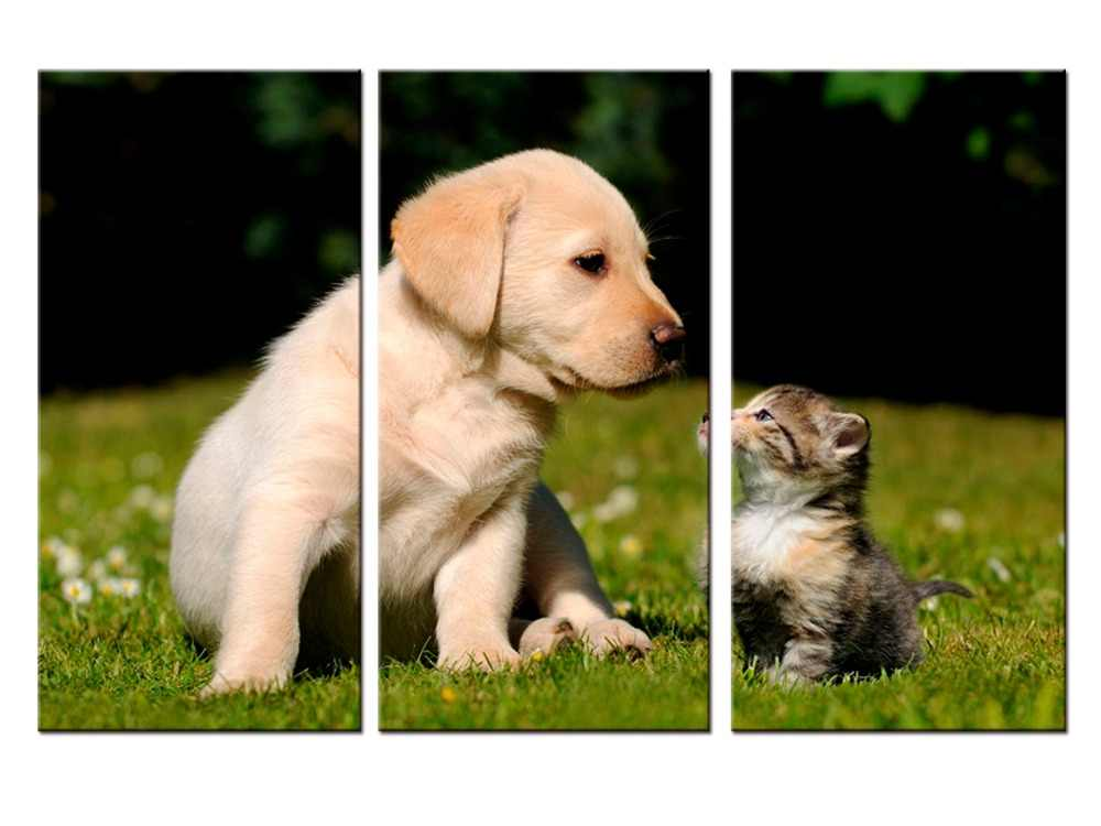 3 pieces / set Printings Cat and Dog Animal Sprout Pet Series Expression Poster Printing Canvas Art Living Room Decor
