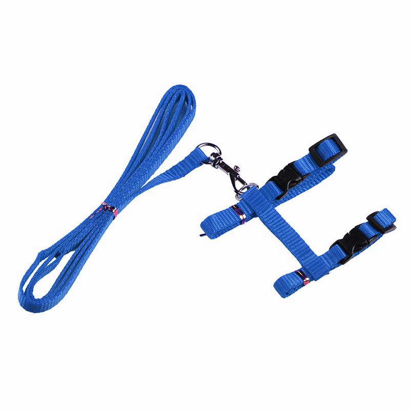 DX01-Blue (2)