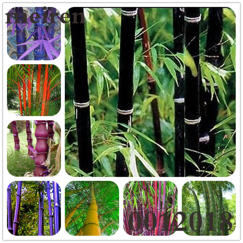 20 Pcs Colorful Bonsai Bamboo Moso Gaint Bamboo Tree Outdoor Plant For Home Garden Decoration Potted Plant bonsai seedlings figure class ultra instinct goku