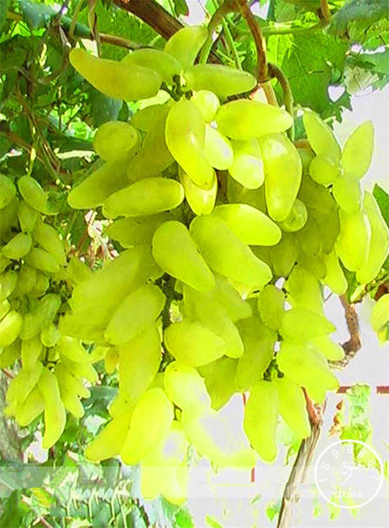 المهلة!! 100% صحيح الذهبي الاصبع الأخضر الحلو العنب العضوية بونساي ، 50 قطعة/الحزمة ، هاردي النبات لذيذ الفاكهة ، # CFXGFB