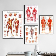 Human Body Muscular System Posters and Prints Wall art Decorative Picture Canvas Painting For Living Room Home Decor Unframed