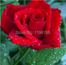 100pc/lot rose seeds, rose bonsai,- 14 Kinds rose  seed 49%