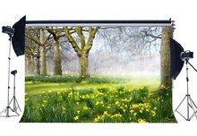 خلفية الربيع خلفية غابة الغابة الأشجار القديمة العشب الأخضر المرج الزهور الطازجة Ywllow طبيعة التصوير خلفية