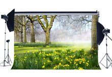 Frühling Hintergrund Dschungel Wald Kulissen Alten Bäume Grüne Gras Wiese Frische Ywllow Blumen Natur Fotografie Hintergrund