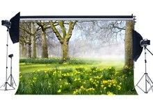 Wiosna tło dżungla las tła stare drzewa zielona trawa łąka świeże kwiaty Ywllow natura fotografia tło