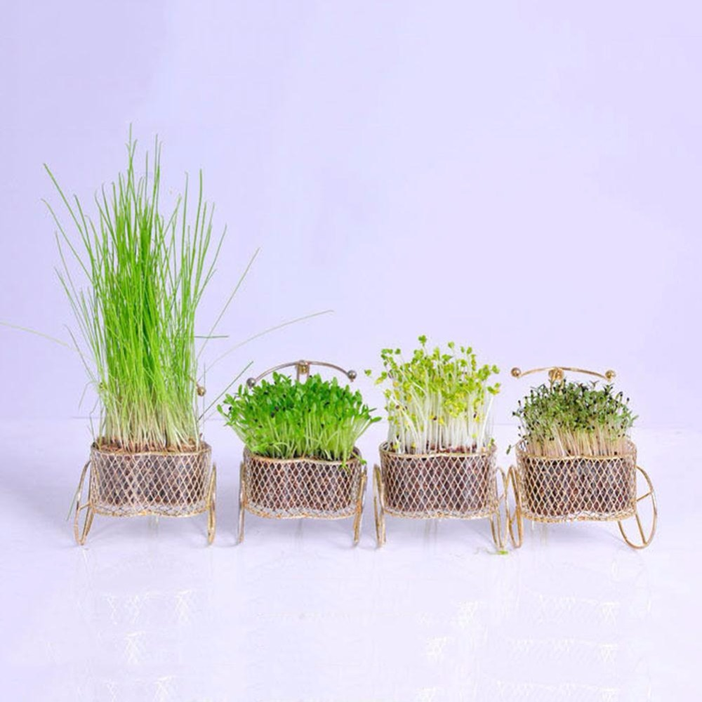 Creative Love Bike DIY Plants Bonsai Grass Seeds Home Garden Decor ...