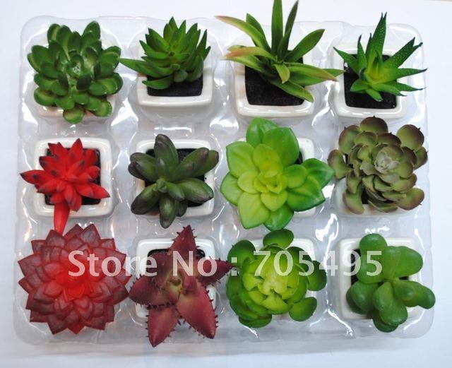 plante grasse livraison