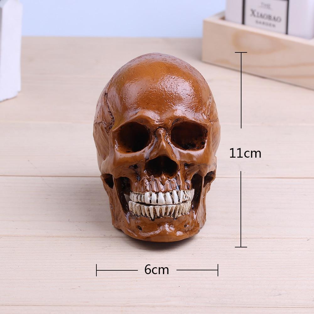1:3 10cm Human anatomy Skull Muscle Replica Resin Model skull brain ...