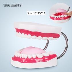 Tdubeauty seis veces de aumento maqueta de boca completa modelo de enseñanza Dental la presentación de alto grado envío gratis