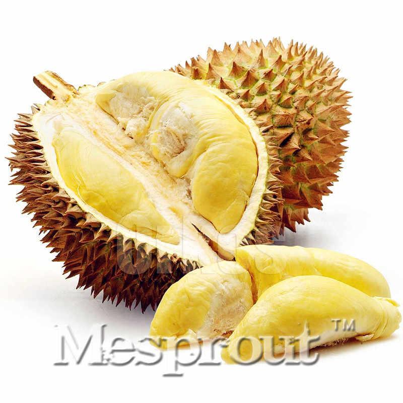 بيع 5 pcs الكثير أشجار بونساي دوريان لذيذ ملك الفاكهة بذور العملاق في الهواء الطلق النباتات النادرة Sementes مضحك بونساي