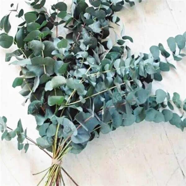 100 sztuk meksykańskie gigantyczne drzewa eukaliptusa ogród powieść roślin dziedziniec roślin drzewiastych, zwalczanie szkodników, drzewa tropikalny do doniczki