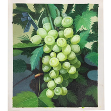 100% Hand painted Grape hyper-realistic Art Painting On Canvas Wall Adornment picture For Live Room Home Decor