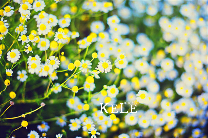 По немецки цветок
