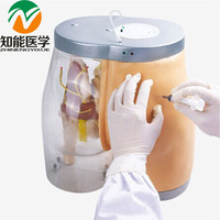 BIX H5T Transparent Anatomical Structure Compared Buttocks Intramuscular Injection Training Model