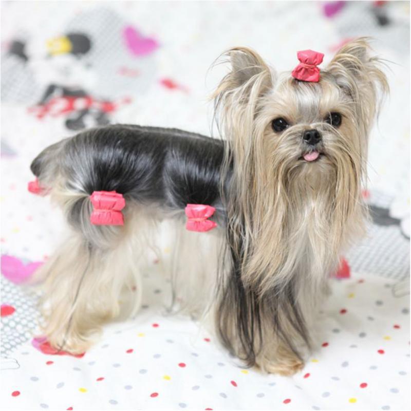 HTB1fq49Fr5YBuNjSspoxh6eNFXaO - 10PCS Bowknot Cute Dog Rubber Band Handmade Pet Grooming Accessories