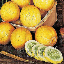 20 Lemon Cucumbers are tasty eaten fresh and also are great pickled Garden vegetable