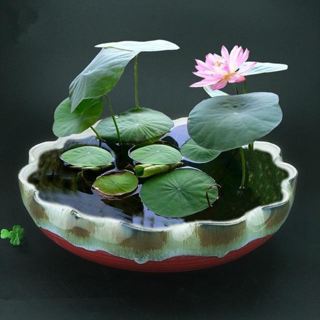 20 Bowl Lotus Seeds Indoor And Outdoor Sowing Seeds Seasonal Garden