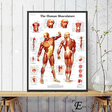 Human Body Anatomy System Posters and Prints Wall art Decorative Picture Canvas Painting For Living Room Home Decor Unframed human body anatomy chart wall art canvas painting poster for home decor posters and prints unframed decorative pictures