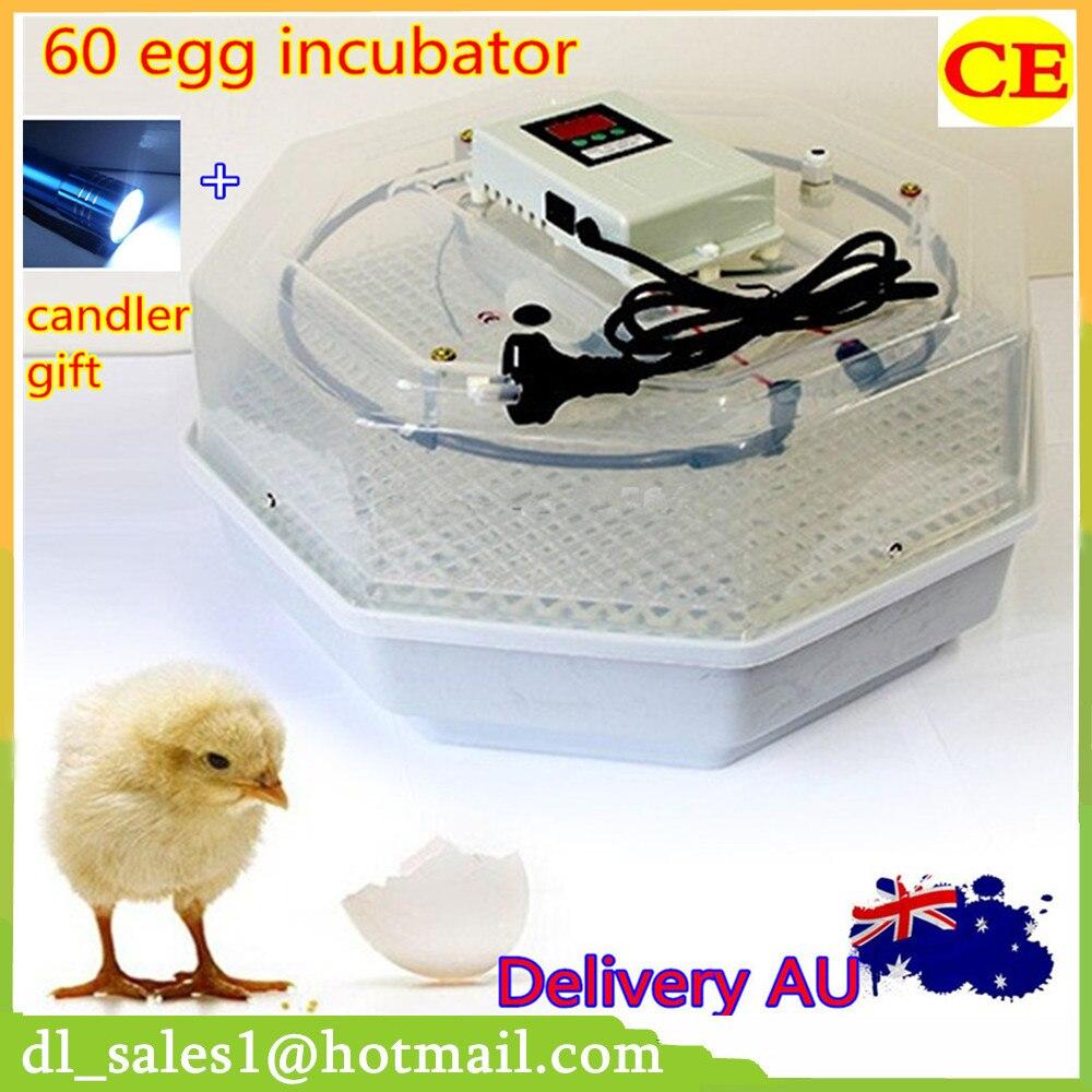 Best Price Incubator 60 Eggs 220V Egg Incubator Chicken Duck Poultry Incubator Machine Price 60 eggs incubator new design jn5 60 mini egg incubator poultry hatcher egg chicken quail duck incubator