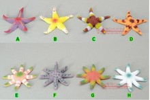 mini size pvc 8pcs/set Solid marine animal model toy color starfish tasteless and odorless
