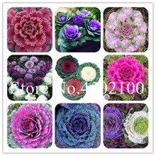 100 шт./пакет красочные Кале цветения декоративные овощ капуста цветение в бонсай или горшок украшения сада