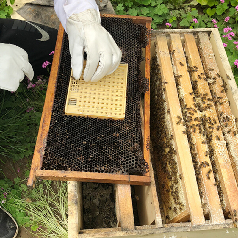Complete Queen Rearing Cupkit System Bee Beekeeping Catcher Box 100 Cell Cups