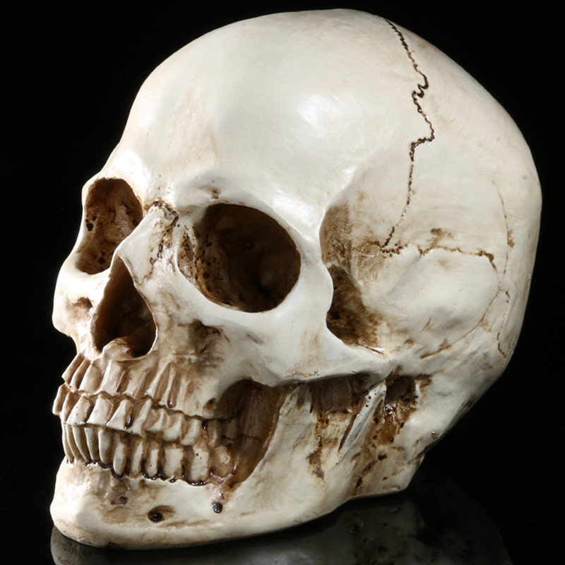 aliexpress com buy high quality human skull replica resin model