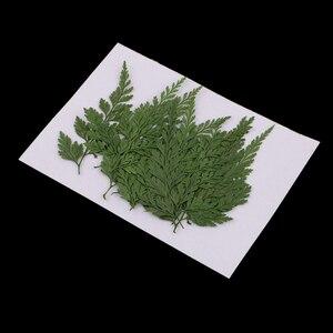 12 шт прессованный высушенный папоротник листья гербарий из растений DIY искусство ремесла Скрапбукинг