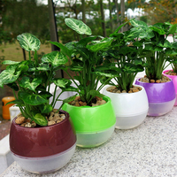 Self Watering Planter Automatic Watering Plant Pots PP Plastic Office Home Decor Flower Pots Mixed Colors