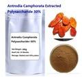 Free shipping Antrodia Camphorata extract Polysaccharide 30%  mushroom extract powder 200g