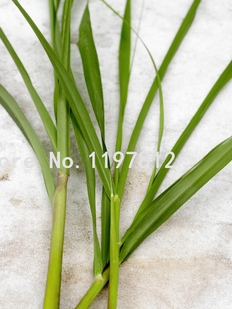 lemongrass seeds Picture - More Detailed Picture about ...