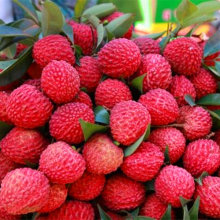 10 pcs/bag litchi Seeds giant Lychee seeds Home Gardening Outdoor Fruit seeds bonsai tree Sementes House plant pot seeds