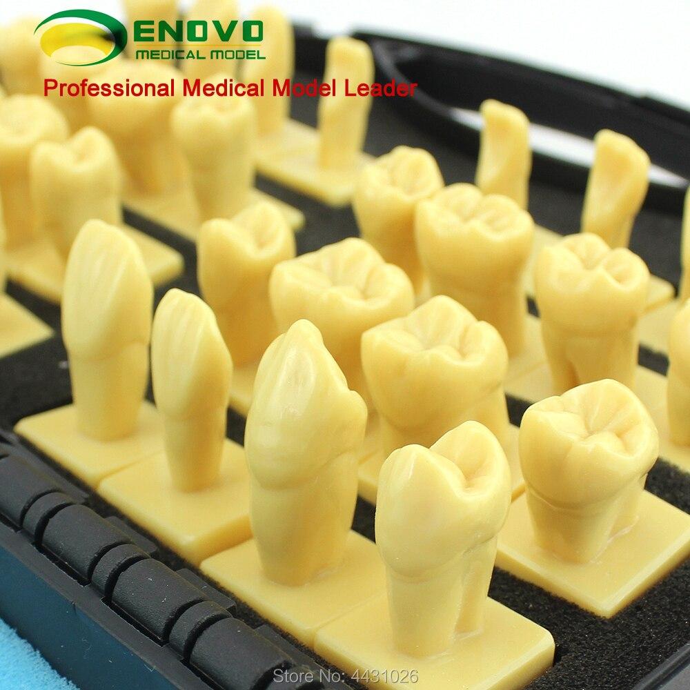 ENOVO The dental prosthesis was used to reconstruct the dental prosthesis analasing the dental industry