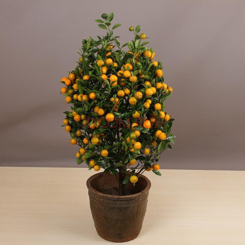 60 pcs Edible Fruit Delicious Indoor Bonsai Tree Seeds Citrus Bonsai Mandarin Orange Seeds Bonsai Tangerine