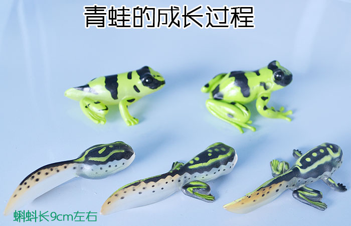 Baby animal frog tadpoles grow aids early childhood education model toys