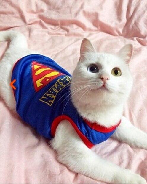 Одежда для кошек roupa